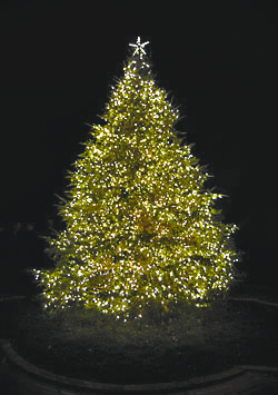 A Christmas tree glows brightly in the gardens
